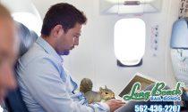 Squirrels on Planes?