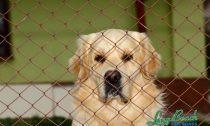 Animal-cruelty-laws