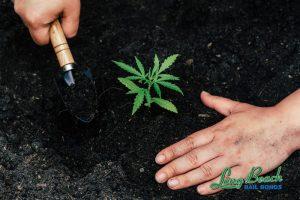 cypress-bail-bonds